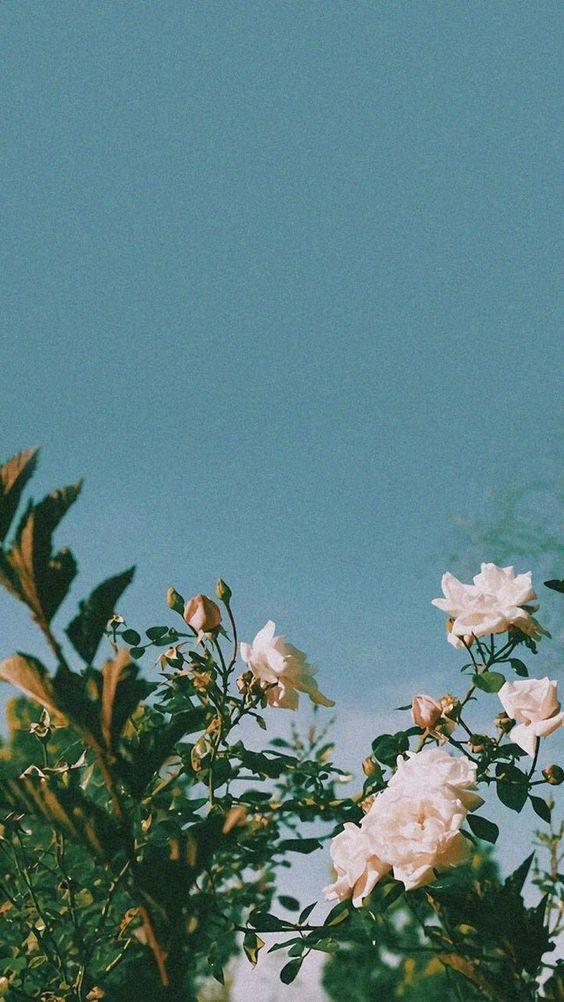 iphone wallpapers, summer wallpapers, wallpaper iphone tumblr