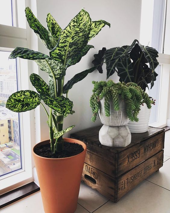 36 Ways to Create Your Own Plant Zoom plants, plants decor for home, home decor